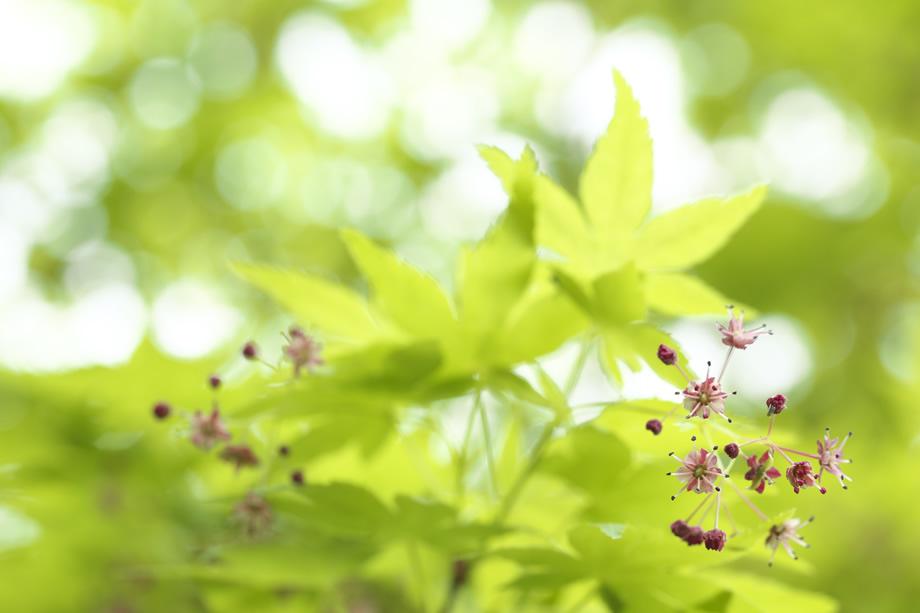 自然写真家 石井 孝親がマクロレンズSP 90mmでありのままの自然の姿をストレートに捉えたネイチャーフォト