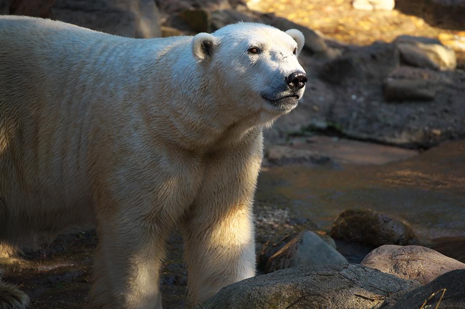 写真家 桃井 一至が超望遠100-400mmで撮る動物園