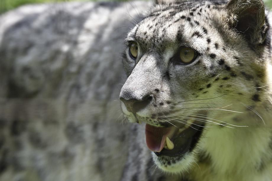 写真家 大浦 タケシがタムロンSP 150-600mm F/5-6.3 Di VC USD G2(Model A022)で撮る動物園