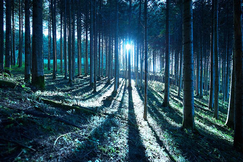 写真家 畠山 公妥がSP 15-30mm F2.8 Di VC USD G2で撮影する美しの森 北海道日高地区