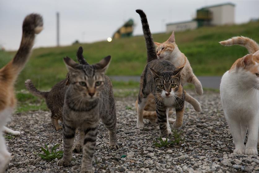 写真家 沖 昌之がタムロンSP 24-70mm F/2.8 G2で撮る東京下町の猫たち