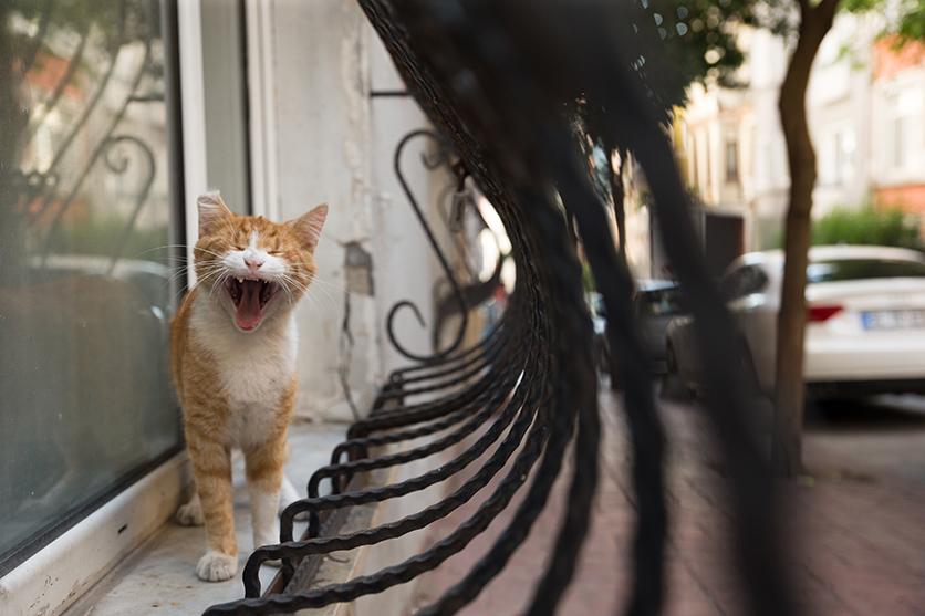 写真家 沖 昌之がタムロンSP 24-70mm F/2.8 G2で撮るトルコの街猫