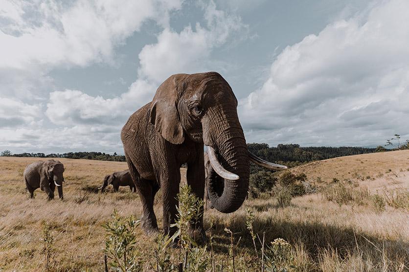 写真家 Shawn Ogulu氏が新発売となる超広角ズーム、タムロン11-20mm F2.8 (Model B060)で撮影した野生動物など全11作品を公開