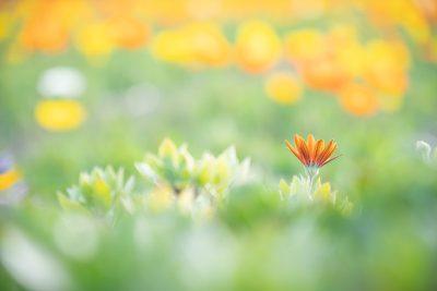 フォトグラファー 北村 佑介氏がタムロン17-70mm F2.8 (Model B070)でバリエーション豊かに撮る、春の花